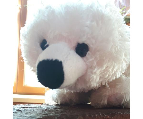Cafe Teddybär
