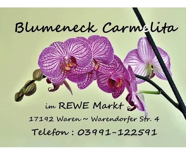 Blumeneck Carmelita