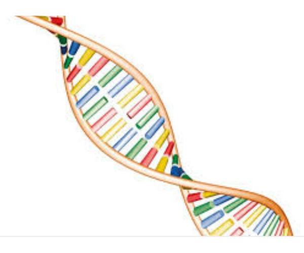 """Abnehmprogramm """"Bodykey"""" durch DNA-Test"""