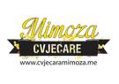 Cvjecara Mimoza
