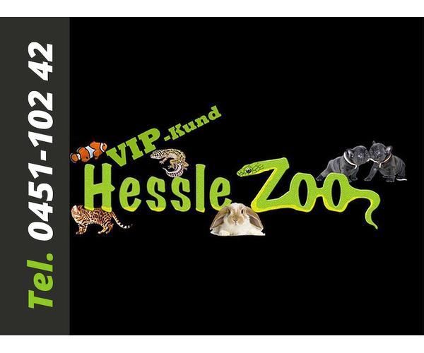 Hessle Zoo