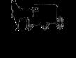 Amish & Healthy Foods